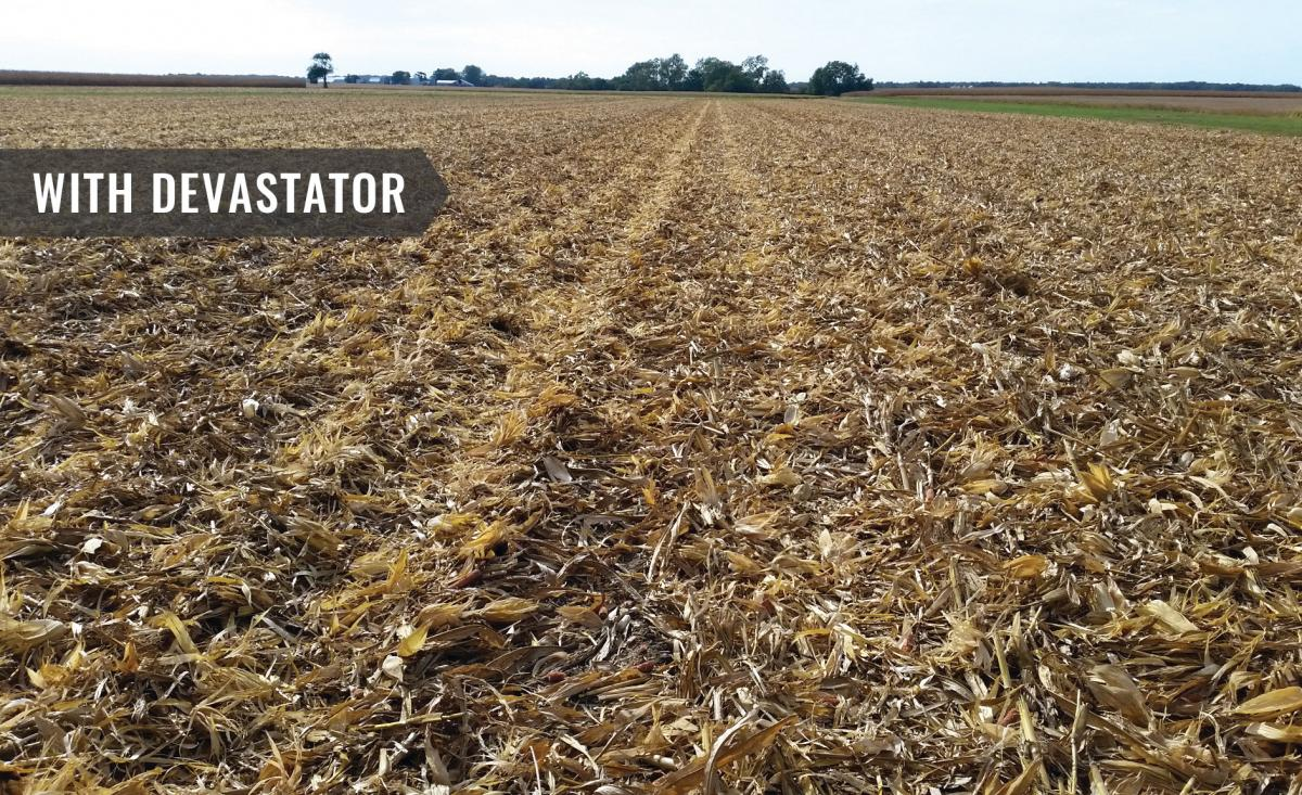 a recent field after the stalk devastator has crushed and crimped the stalks