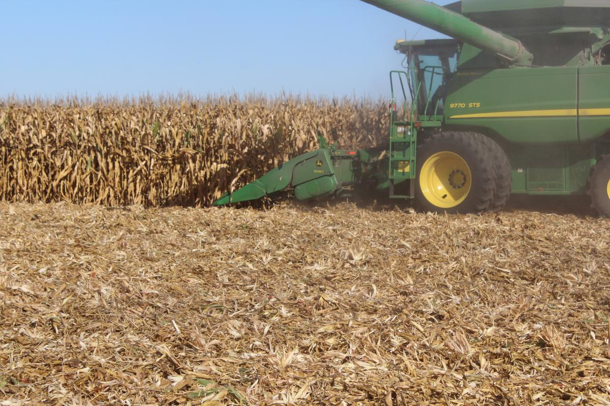 side view of stalk devastators under the corn head