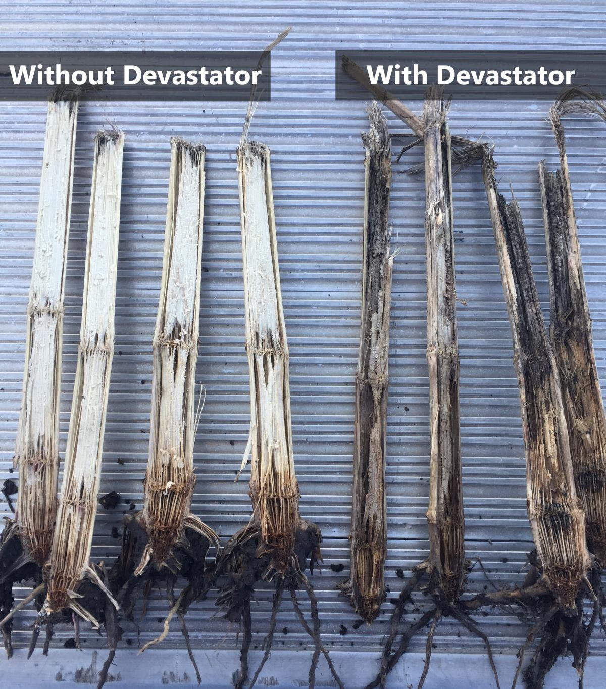 side by side showing what the devastator can do for corn stalks