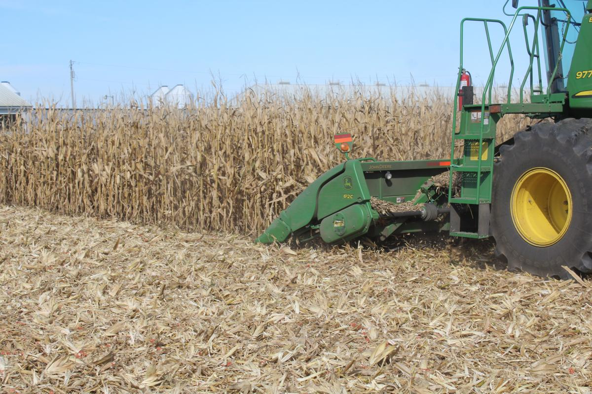 stalk devastator running through corn stalks under the corn head