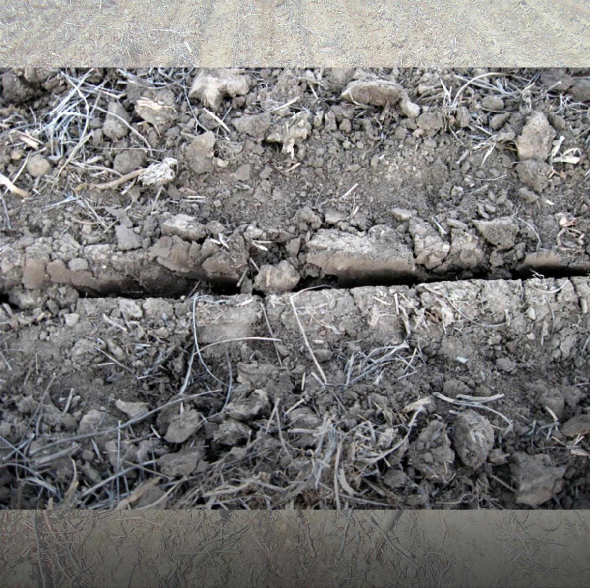 An open V in the seed trench, showing poor seed-to-soil contact.